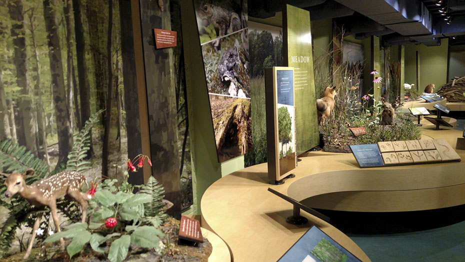 HABITAT MURALS AND THEMATIC DIORAMAS